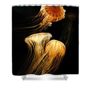 Jellyfish Trio Floating Against A Black Shower Curtain
