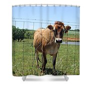 Jersey Cow In Georgia Shower Curtain