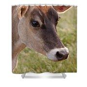 Jersey Cow Portrait Shower Curtain