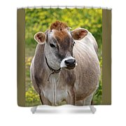 Jersey Cow With Attitude - Vertical Shower Curtain