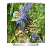 Jewel In The Glade 2 Shower Curtain
