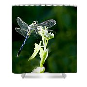 Jeweled Wings Shower Curtain