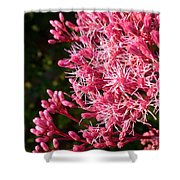 Joe Pye Weed Shower Curtain