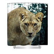 Join Me For Lunch? Shower Curtain