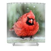 Jolly Old ....... Cardinal  Shower Curtain