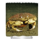 Jonah Crab Shower Curtain