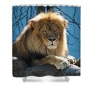 Joshua The Lion On His Rock Shower Curtain