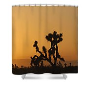 Joshua Tree At Sunset Shower Curtain