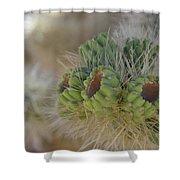 Joshua Tree Cholla Cactus Shower Curtain