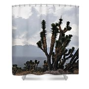 Joshua Tree Forest Ivanpah Valley Shower Curtain