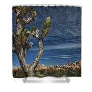 Joshua Tree In Joshua Tree National Park No. 279 Shower Curtain