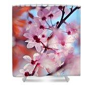 Joy Of Spring. Pink Spring In Amsterdam Shower Curtain