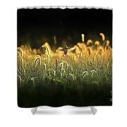 Joy Of Summer - Version 2 Shower Curtain