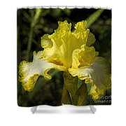 Joy Of Sunshine Shower Curtain