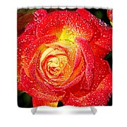 Joyful Rose Shower Curtain