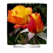 Judy Garland Rose Shower Curtain by Rona Black