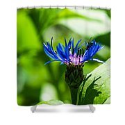 Juice Bar - Featured 3 Shower Curtain
