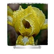 Juicy Lemon Petals Shower Curtain
