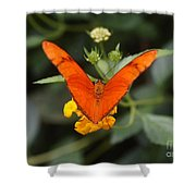 Julia Butterfly 1 Shower Curtain