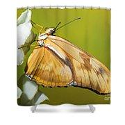 Julia Butterfly Shower Curtain