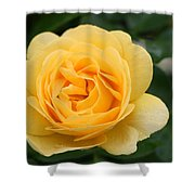 Julia Child Floribunda Rose Shower Curtain