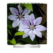 Julia's Bouquet   #6321 Shower Curtain
