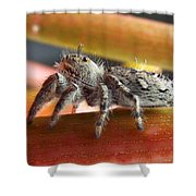 Jumper Spider Shower Curtain