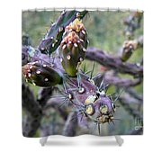 Jumping Cholla Catalina Foothills Shower Curtain