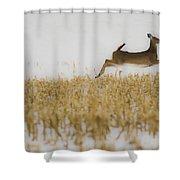 Jumping Doe In Corn Field Shower Curtain