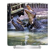 Jumping Gators Shower Curtain