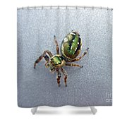 Jumping Spider - Green Salticidae Shower Curtain