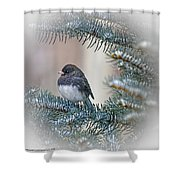 Junco In Pine Shower Curtain