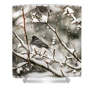 Junco In The Snow Shower Curtain