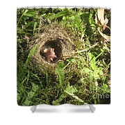 Junco Nest In The Lawn Shower Curtain