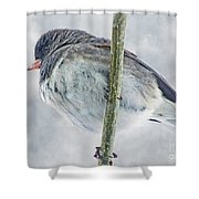 Junco On A Twig Shower Curtain