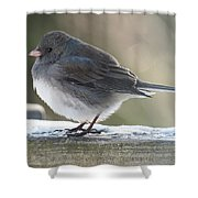 Junco On Board Shower Curtain