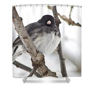 Junco Posing Shower Curtain