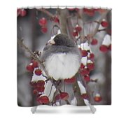Junco Puffed Up On Crabapple Tree Shower Curtain