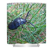 June Bug Shower Curtain