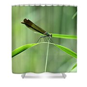 June Damselfly  Shower Curtain