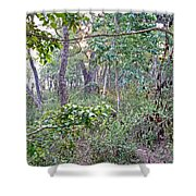 Jungle Forest In Chitwan Np-nepal Shower Curtain