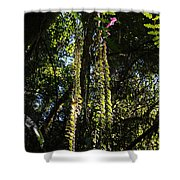 jungle in La Amistad National Park Panama 7 Shower Curtain