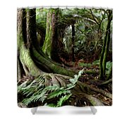Jungle Trunks3 Shower Curtain by Les Cunliffe