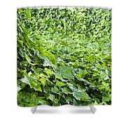 Jungle Vines Shower Curtain