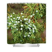 Juniper Berries Shower Curtain