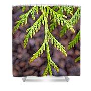Juniper Leaf Shower Curtain