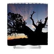 Juniper Tree, Canyonlands National Park Shower Curtain