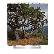 Juniper Tree On The Edge Of The Verde Valley Shower Curtain