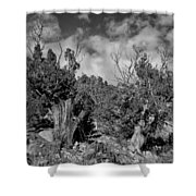Juniper Trees At The Ghost Ranch Black And White Shower Curtain