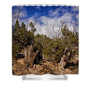 Juniper Trees At The Ghost Ranch Color Shower Curtain